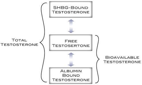shbg procedure